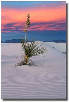 ✯ White Sands - New Mexico - this is where I told mom I needed a drink and she told me to shollow my spit....but daddy saved me and took me to the parking lot and go water...i could had died...lol