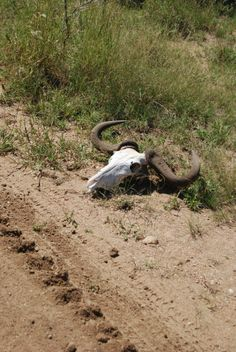 Kruger national park South Africa, my own picture!