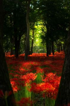 Welcome! :) — lifeisverybeautiful: a wood of red magic lily...