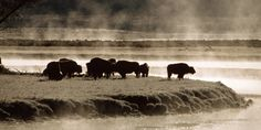 Yellowstone Canvas Art Prints   Yellowstone Panoramic Photos, Posters, & More   Great Big Canvas