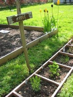Use an old wooden ladder to divide up planting space in your garden. by francis