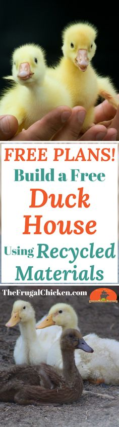 Free Duck House Plans We Built A Free Duck House In 1 Hour With Recycled Materials (And So Can You!) is part of Free Duck House Plans We Built A Free Duck House In Hour - If you have ducks, they'll need a place to live, right That's where our free duck Raising Backyard Chickens, Backyard Poultry, Pet Chickens, Chicken Coop Plans, Building A Chicken Coop, Duck House Plans, Backyard Ducks, Duck Coop, Duck Farming