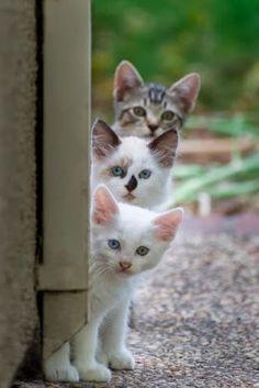 The three amigos - adorable!