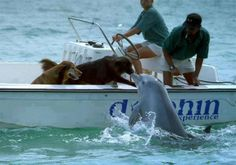 Curious dogs and dolphin. If two different species can get along, why can't we as humans do the same?