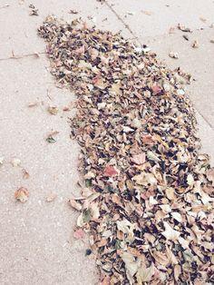 So many leaves
