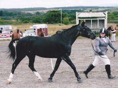 Horse Greying slowly with age.