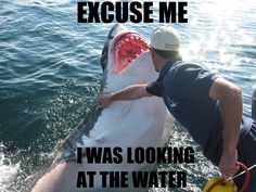 "Stop Trying to Photobomb, Shark! - Funny memes that ""GET IT"" and want you to too. Get the latest funniest memes and keep up what is going on in the meme-o-sphere. Excuse Moi, Swim Club, Humor Grafico, Shark Week, Just For Laughs, I Smile, Laugh Out Loud, The Funny, I Laughed"