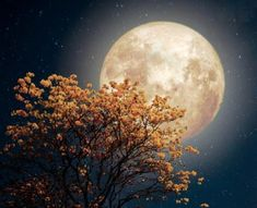 At the end of this week we have a full moon in the sign of Pisces taking place on September. This full moon is known as the Harvest moon and is the full moon associated with the Autumn. Virgo And Pisces, Full Moon In Pisces, Wild Orange Essential Oil, Geranium Essential Oil, Moon Time, Dried Lavender Flowers, Fear Of The Unknown, Water Signs, Restorative Yoga