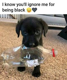 Watch funny and cute dogs and puppies as they are the most lovable pets in the world. Super Cute Puppies, Baby Animals Super Cute, Cute Baby Dogs, Cute Little Puppies, Cute Dogs And Puppies, Cute Little Animals, Doggies, Black Lab Puppies, Adorable Puppies