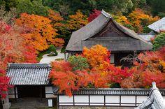 rock garden in Japan