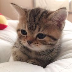 Cute little kitten!