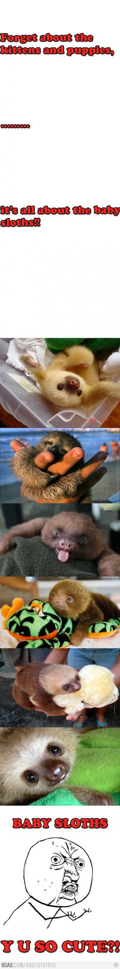 Baby sloths are awesome!