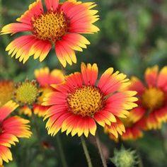 Garden Smarter When you Plant These 5 Low-Maintenance Perennials | Garden Club