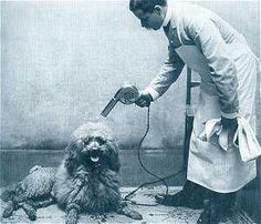 Old style dog grooming