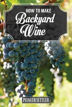 How to Make Wine in Your Backyard - Winemaking Basics   Self-sufficiency Project Brewing and Distilling by Pioneer Settler http://pioneersettler.com/how-to-make-wine-at-home/