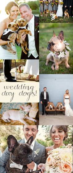 Your wedding day is supposed to be spent with the people you love the most, and for many of us that includes our dogs!