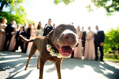 spring wedding, dog at wedding, bridal party, bridal party with dog, chocolate lab, pink bridesmaid dress, floral dog collar #wedding