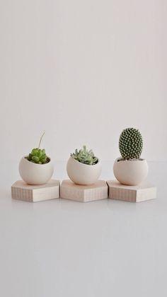 Cactus and succulents looking great as a trio Cacti And Succulents, Potted Plants, Garden Plants, Indoor Plants, Succulent Planters, Cactus Terrarium, Cactus Pot, Plant Pots, Design Floral