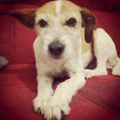 Brenda é uma moradora de São Paulo/SP, é brincalhona, amorosa e castrada. Brenda não gosta de ficar sozinha e se dá muito bem com outros peludinhos! Para adotar é só clicar: http://www.amigonaosecompra.com.br/pets/5141-brenda-cachorro-pequeno-femea-adulto-docil-brincalhao-sociavel-carente-calmo-gatos-cachorros-criancas-desconhecidos-casa-com-quintal-castrado-vacinado-sp-sao-paulo