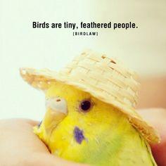 Avian Rights Activist : Photo
