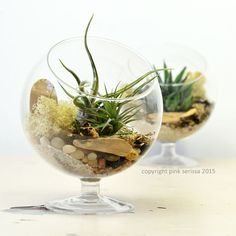 Air Plant Terrarium// Footed Glass Orb// Living by PinkSerissa
