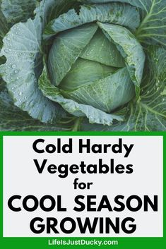 When to plant cool season vegetables in your vegetable garden. And why it matters. How to know when it is time to plant in the soil in your backyard garden or small homestead. For spring gardening and Fall gardens too. A list of 22 cold weather crops. Fall Vegetables, Healthy Vegetables, Growing Vegetables, Growing Tomatoes, Garden Plants Vegetable, Fruit Garden, Veggie Gardens, Autumn Garden, Spring Garden