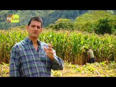 Como Producir Ensilaje de Maíz Producido Parte 1 por Juan Gonzalo Angel ...
