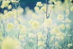 ふわり。 by kero*, via Flickr