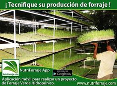 ¿Qué es el Forraje Verde Hidropónico?