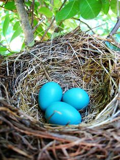 ...always a sweet surprise to find a nest hidden one of our window boxes or small shrubs.