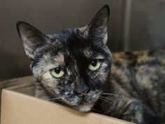 ***UNKNOWN 06/29/17*** BEAUTIFUL 16 YEAR OLD TABBY WAS FRIENDLY, MELLOW, QUIET AND AFFECTIONATE IN HER PREVIOUS HOME WHICH SHE LOST TO EVICTION. NOW SHE IS OFF HER GAME BEING IN THE SCARY SHELTER AND NEEDS SOMEONE WHO WILL GIVE HER A RETIREMENT HOME WHERE SHE CAN RELAX AND LIVE HER GOLDEN YEARS FEELING LOVED AGAIN!! MUST RESERVE VIA A NEW HOPE RESCUE BY NOON!!