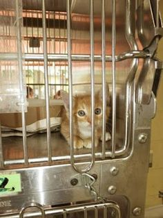 A Downey Cat Blog: DOWNEY CA: SAVE FISTO! 2 MONTH OLD ORANGE TABBY  ... Pet Dogs, Dog Cat, Pets, Foster To Adopt, Animal Help, Local Shelters, Little Puppies, Animal Rights, Cat Love