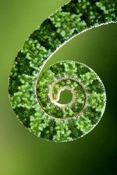 verde---➽viridi➽πράσινος➽green ➽verde➽grün➽綠➽أخضر ➽зеленый World Of Color, Color Of Life, Patterns In Nature, Textures Patterns, Go Green, Green Colors, Green Life, Spirals In Nature, Pics Art