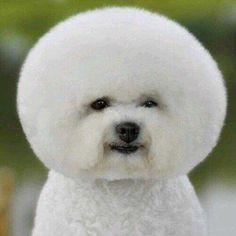 犬泉くんのさんブログプロフィール画像 Amebaブログプロフィール
