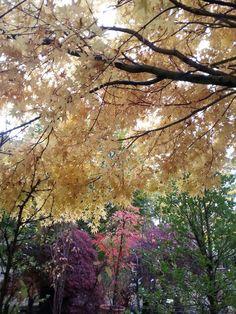 Oro dell'autunno