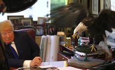 Siria y la rendición de Trump a los halcones de Washington - Debate Directo