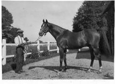 Massine(1920)(Colt)Consols- Mauri By Ajax. 4x4 To St Simon, 5x5 To Beadsman & Wellingtonia, 5x5x5 To Galopin. 19 Starts 12 Wins 6 Seconds. Won Prix Lupin(Fr), Prix Des Sablons(Fr), Ascot Gold Cup(Eng), Prix De L'Arc De Triomphe. Leading Sire In France In 1932 & 1936. Died In 1939.