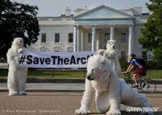 greenpeace arctic - Google Search