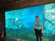 Viajando com Daniela Cascardo: Aquática, Orlando
