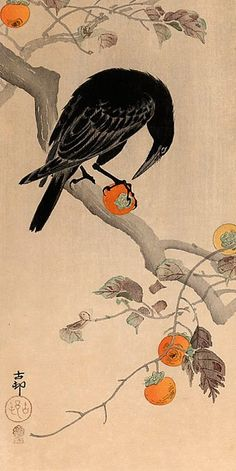 , Crow eating a Persimmon - Ohara Koson. Completion Date: , Crow eating a Persimmon - Ohara Koson. Completion Date: Crow Art, Bird Art, The Crow, Ohara Koson, Art Asiatique, Art Et Illustration, Botanical Illustration, Illustrations, Inspiration Art