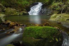 Kondalilla National Park | 100 things to do on the Sunshine Coast