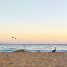 A hora da gaivota //seagull hour #gaivotas #caianoite #anoitecer #diasgrandes…