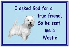 I love my Westie! Westies, Westie Puppies, Dogs And Puppies, Cute Puppies, Doggies, Chihuahuas, West Highland Terrier, West Highland White, Thoughts