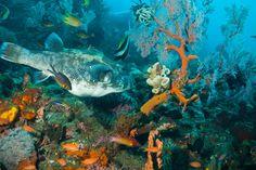 snorkelen schijnt heel mooi te zijn bij Amed