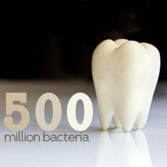 500 million bacteria