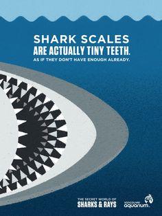 Vancouver Aquarium: Bones, Teeth