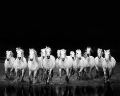 Horses Running in Water Black and White by EyePoetryPhotography, $30.00