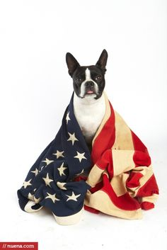 San Francisco Dog Photographer - 4th of July | Nuena Photography