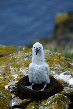 A baby Albatross http://ift.tt/2eIu9RQ