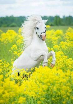 photos of Adorable pony Beautiful Horse Pictures, Most Beautiful Horses, Animals Beautiful, Cute Animals, Cute Horses, Pretty Horses, Horse Love, Cavalo Wallpaper, Horse Wallpaper